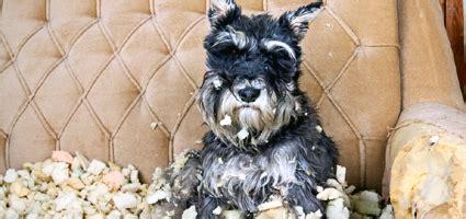 abnormal behavior  dogs