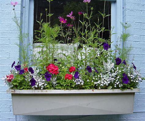 Window Box Flower Ideas  Car Interior Design