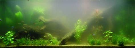 eau d aquarium trouble de mon aquarium eau trouble fin