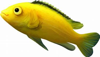 Fish Clipart Yellow Bowl Glass Water