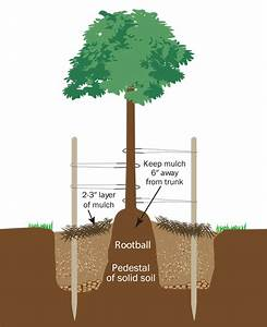 Tree Planting Guide  U2014 Green Acres Nursery  U0026 Supply