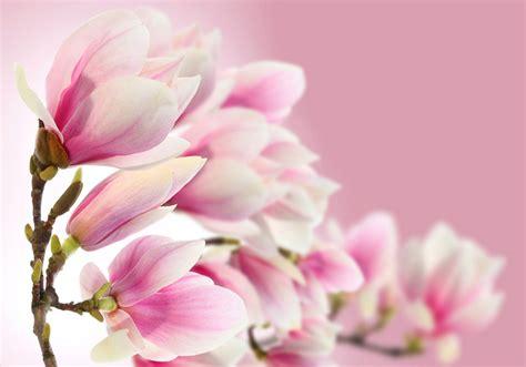 Rosa Blumen by Blumen In Rosa Die 71 Besten Rosa Blumen