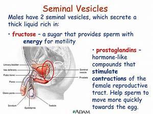 Ch15  Sex Organs  U0026 Hormonal Control