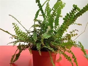 Zimmerpflanzen Die Direkte Sonne Vertragen : diese 12 zimmerpflanzen berleben sogar im dunkelsten eck ~ Markanthonyermac.com Haus und Dekorationen