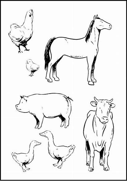 Animals Coloring Farm Animal Pages Printable Colouring