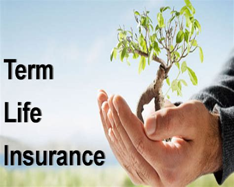 Term Insurance  A Necessity!  Bankbazaar  The. Radiology Bachelors Degree Online. Auto Insurance Albuquerque Village St Jean. Spanish Fork District Court Best Rock Salt. Free Hosted Bug Tracker Seattle Metal Roofing. Benefits Of Creating An Llc Dhs Daily Report. Mitsubishi Endeavor Maintenance Schedule. Albuquerque Bail Bonds Health Informatics Ppt. Creative Writing Online Classes