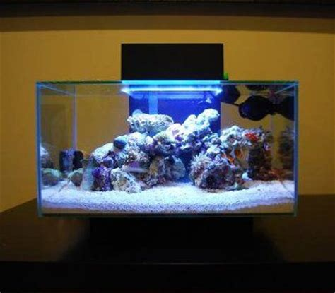 6 gallon saltwater fish fluval edge 6 gallon nano saltwater reef fish tank fully packed 2017