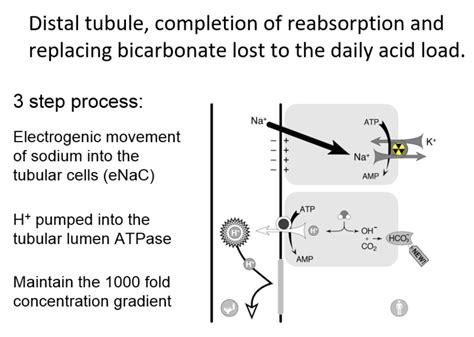 figure  distal renal tubular acidosis type  rta joel