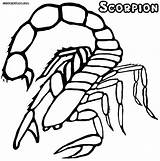 Scorpion Coloring Pages Colorings Print Animal sketch template