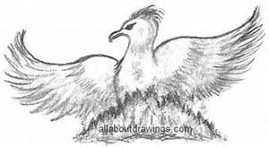 Drawings of The Phoenix Bird