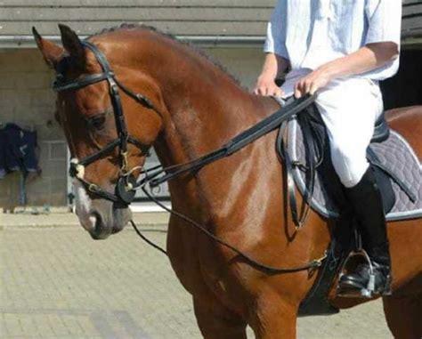 draw reins writing  riding