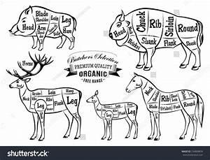 Diagram Cut Carcasses Boar Bison Deer Stock Illustration