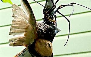 Spider caught eating a bird - Emirates 24|7
