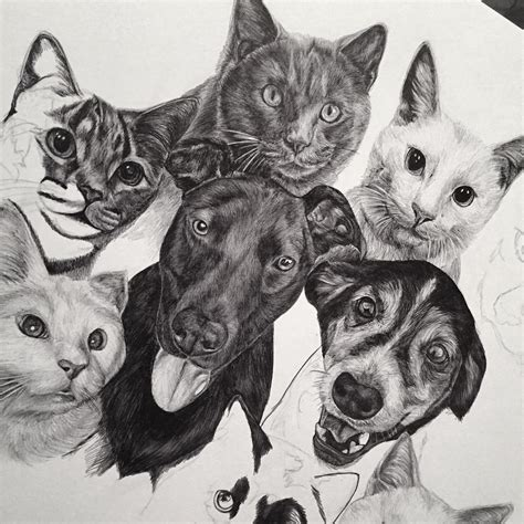 19+ Cat Drawings, Art Ideas, Sketches  Design Trends