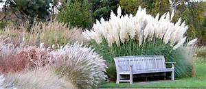 Gartengestaltung Unter Bäumen : pflanzen f r moderne g rten ~ Yasmunasinghe.com Haus und Dekorationen