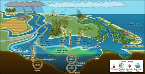 Diagram Of Ocean Animals Diagram Free Engine Image For