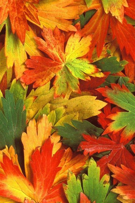 Autumn Phone Wallpaper Wallpapersafari