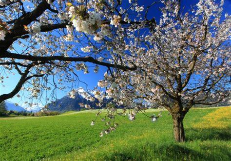Beautiful Spring Landscape Wallpaper Designs 16665
