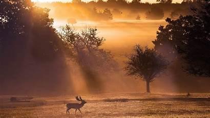 Deer Sunrise Fog Sunset Nature Elk Animals