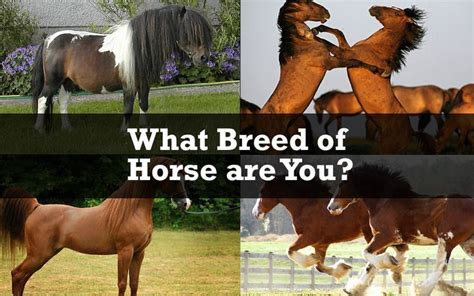 horse clydesdale horses quiz breed quizzes thoroughbred perfect cute crazy kinda kind collect nobleoutfitters