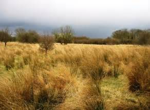 What Kinds of Animals Live in Grasslands