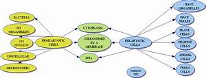 Wiring Diagram Database  Venn Diagram Prokaryotic And