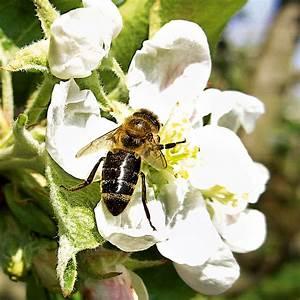 Teppich 3 X 4 M : blumen saat teppich 0 20 x 3 m bunte bienenweide online kaufen bei g rtner p tschke ~ Frokenaadalensverden.com Haus und Dekorationen