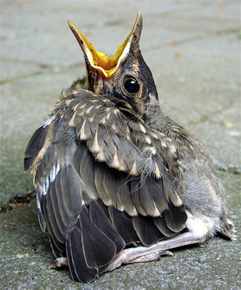 best 28 found a hurt bird who do i call ld urgent