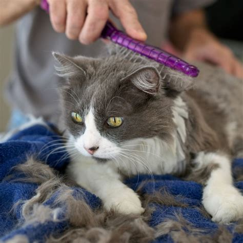 What Is Ringworm And What Are Its Symptoms In Cats? Catster