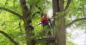 Baum Mit H : der baumdoktor kommt w wie wissen ard das erste ~ A.2002-acura-tl-radio.info Haus und Dekorationen