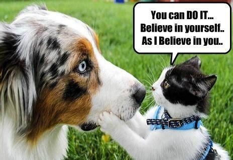 positive cat  encouraging advice    hotdog