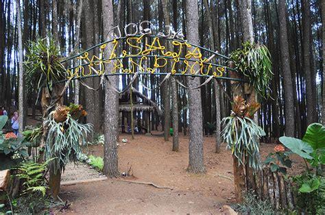 lokasi hutan pinus yogyakarta alamat hutan pinus jogja