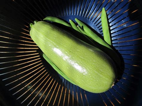 Light Green Squash by 10 Summer Squash Varieties Some You Some You Don T