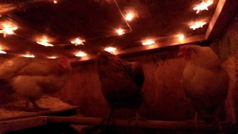 chicken coop lighting