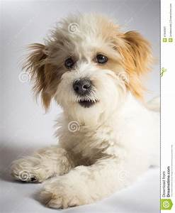 Cute Expressive White Mixed Breed Dog With Red Ears Stock ...