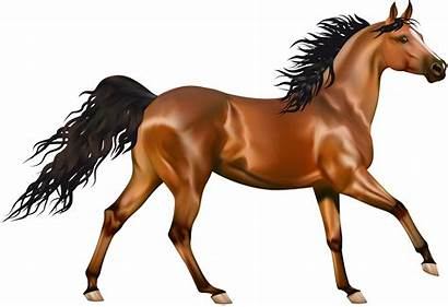 Horse Transparent Brown Clipart Animals Yopriceville