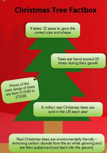 buying a christmas tree this weekend here s our top 10