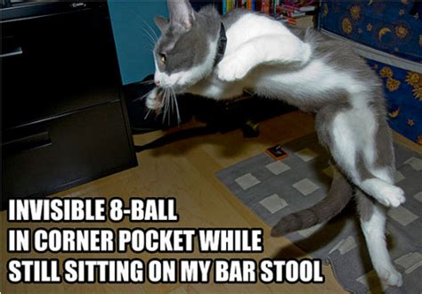 funny pictures  cats  invisible  design swan
