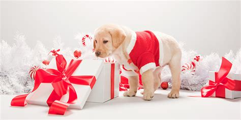 pet gift ideas what to buy your dogs and cats for christmas