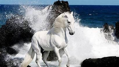 Wallpapers Horses Horse Desktop Computer
