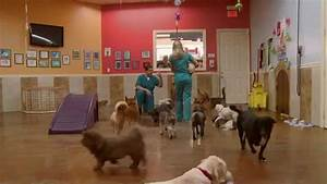 dog grooming and boarding sm important things t With dog boarding and grooming