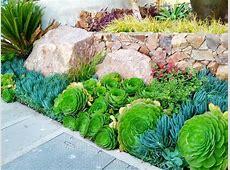 succulent border Our Tropical Garden Pinterest