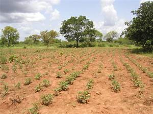 File Burkina Faso - Tolotama Reforestation Jpg