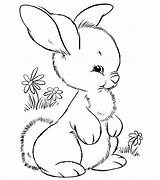 Coloring Pages Bunny Baby Cute Animal Popular Print sketch template