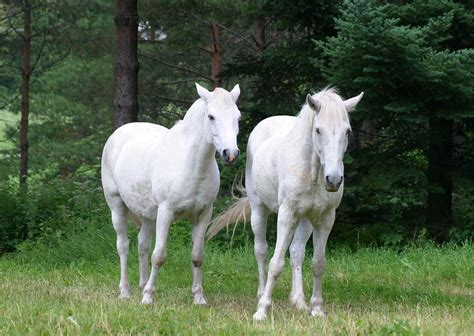 horses horse nice ponies