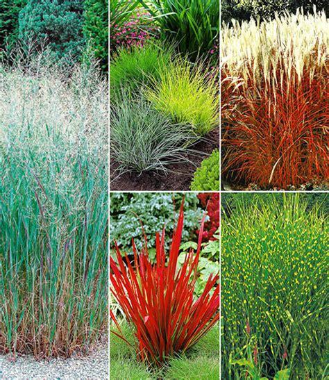 Garten Pflanzen Pralle Sonne by Gr 228 Serbeet 1a Pflanzen Kaufen Baldur Garten