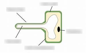 Animal Cell Diagram Gcse Bitesize