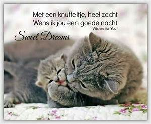 Sweet dreams | Mooie teksten | Pinterest | Nice, Sweet and ...