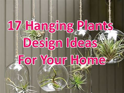 17 Hanging Plants Design Ideas For Your Home Deconatic
