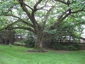 national tree of brazil brazilwood 123countries